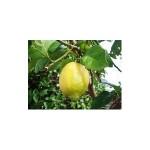 Limones ecológicos Los Alcores