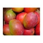 Mangos ecológicos Los Alcores