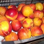 Frutas y hortalizas ecológicas senda verde