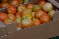 Tomates Senda Verde