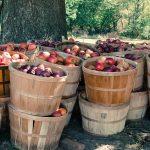 La alimentacion ecologica: más natural, más saludable y más sostenible