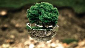 Productos ecológicos para celiacos