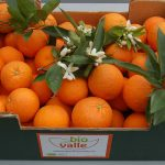 Naranjas Biovalle