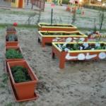 Huertos y jardines ecológicos germinando